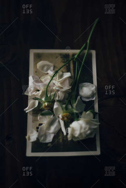 Rose petals on an old photograph