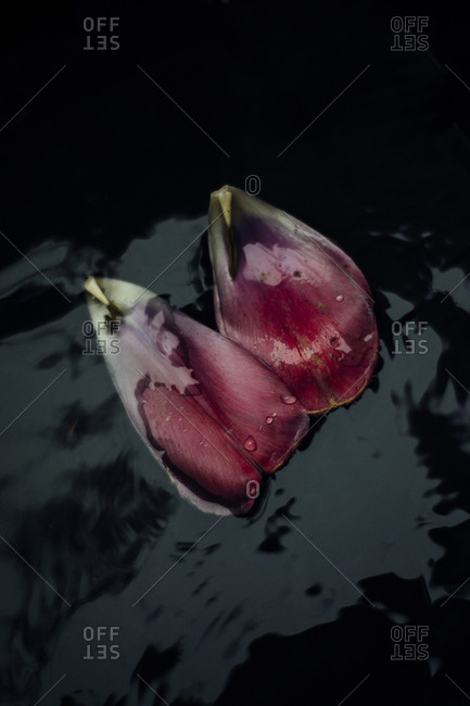 Pink and purple flower petals on water