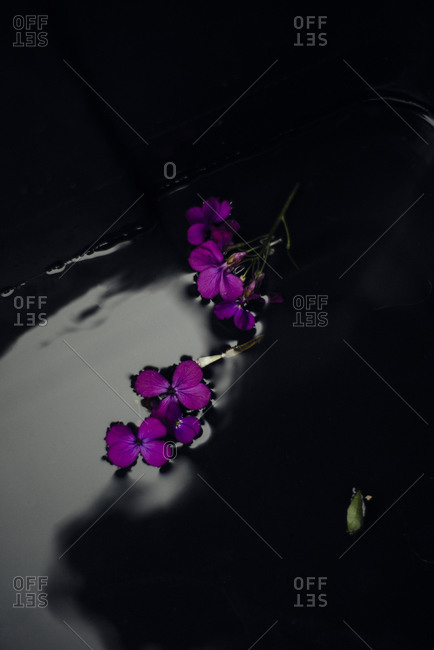 Small purple flowers floating on water