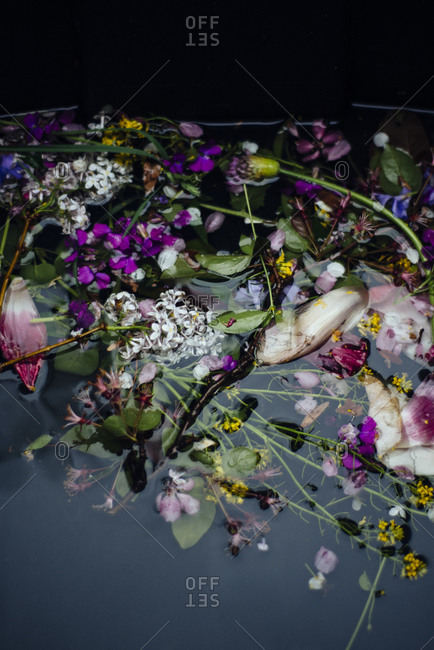 Variety of flowers floating on water