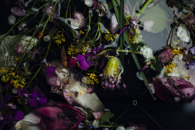 Close up of flowers and petals floating on water