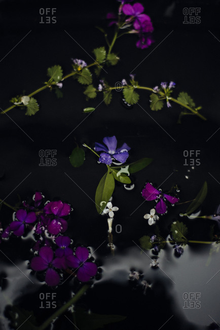 Small purple and magenta flowers floating on water