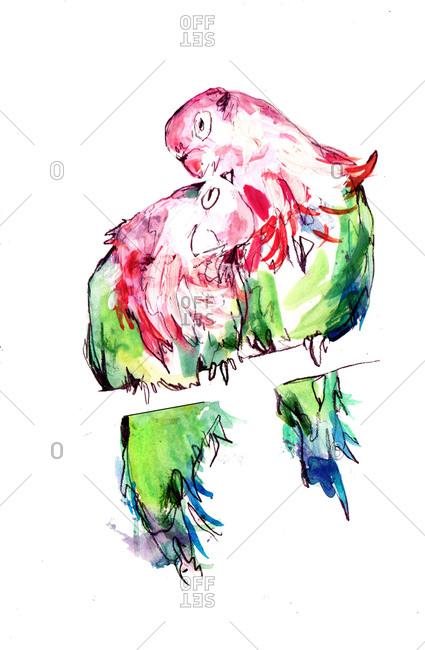 Two lovebirds preening on a perch