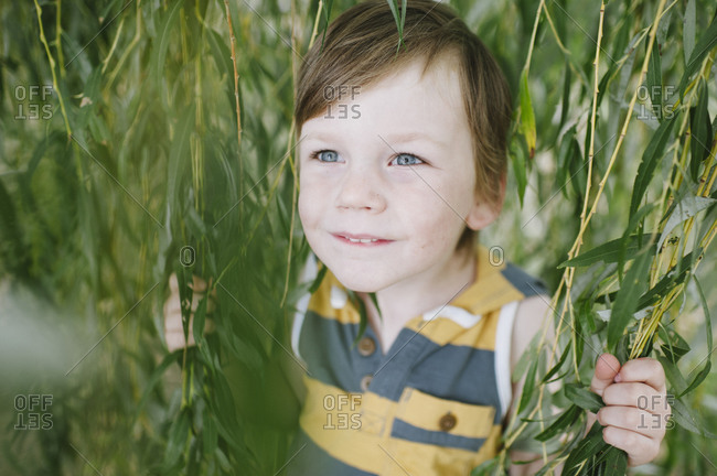 A little boy holds the branches of a weeping willow