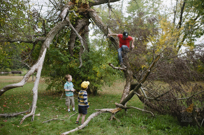 A father climbs down a fallen tree limb in front of his sons