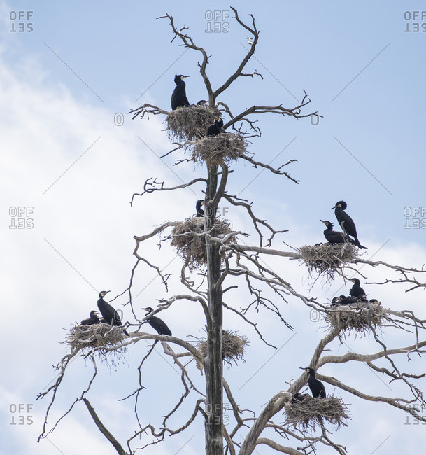 Birds perching on bare tree