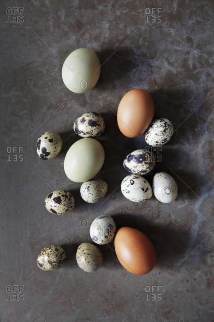 Various eggs, studio shot