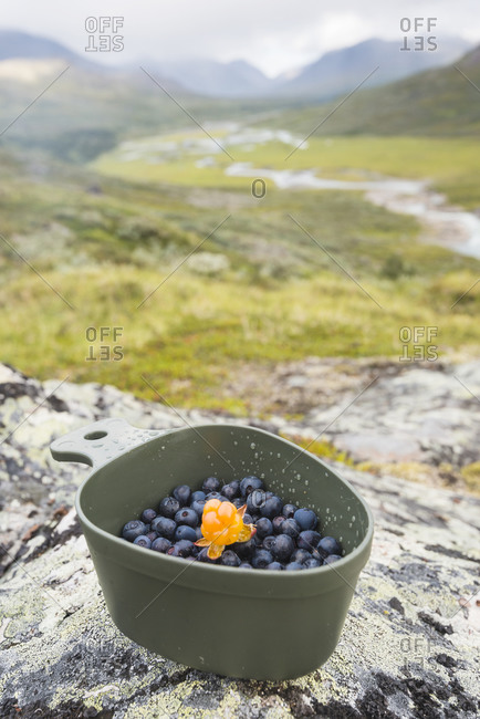 Berries in bowl - Offset Collection