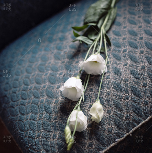 White flowers on a cushion