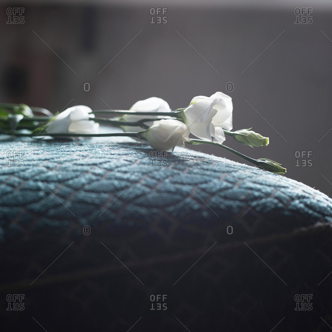 Close-up of white flowers on a cushion