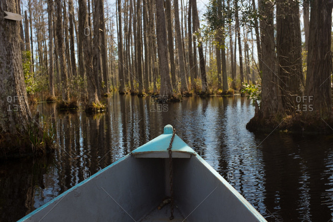 Canoe in a flooded forest