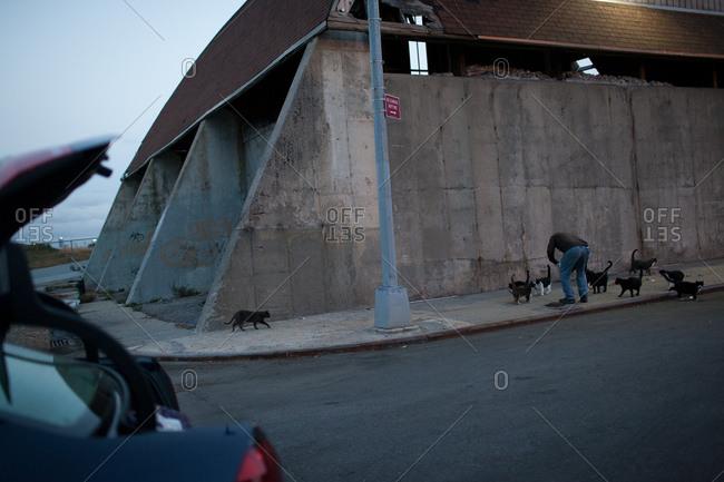 Man feeding stray cats on the street