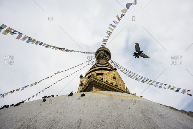 A pigeon flies over a Hindu temple in Nepal