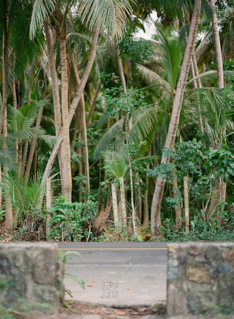 Stone wall and road in front of a tropical jungle of palm trees