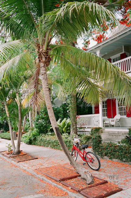 Bicycle parked on sidewalk next to palm trees in front of southern style home