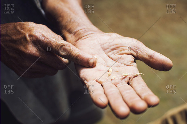 Man's hands holding seeds