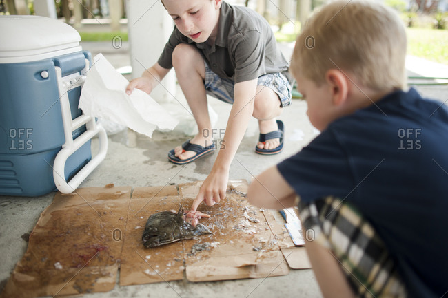 Boys cleaning a fresh caught fish
