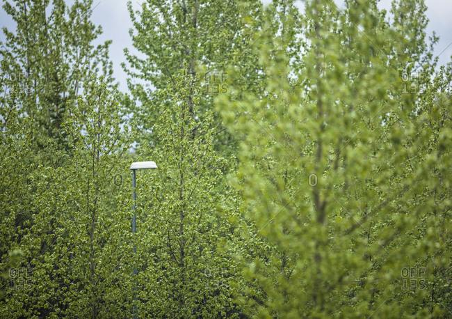 Lamp post seen through trees in Reykjavik, Iceland