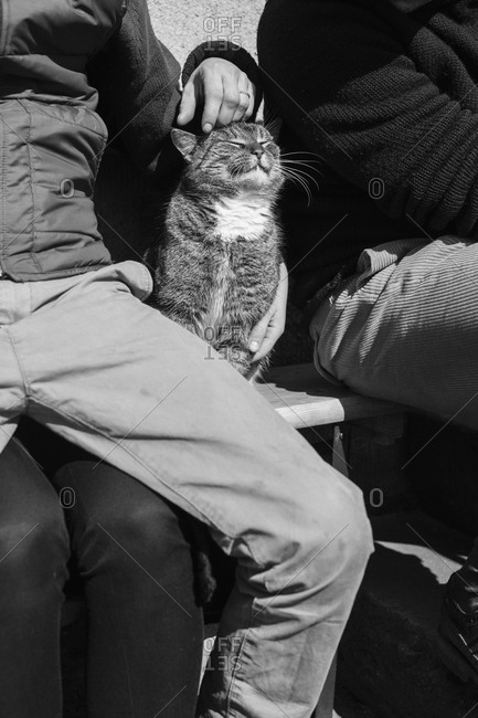 People sitting with cat on bench outdoors