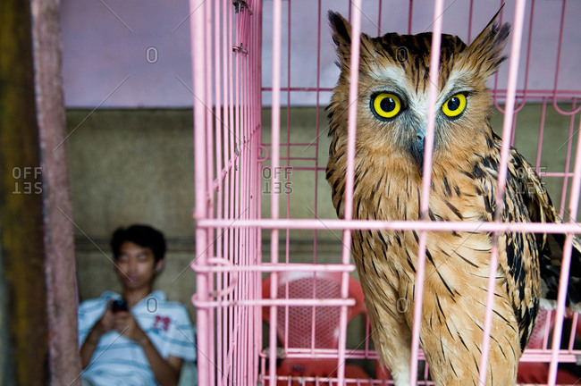 An owl in a pink cage in the bird market