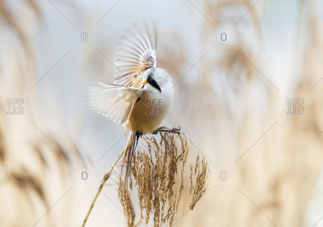 Bird fluttering wings perched on plant