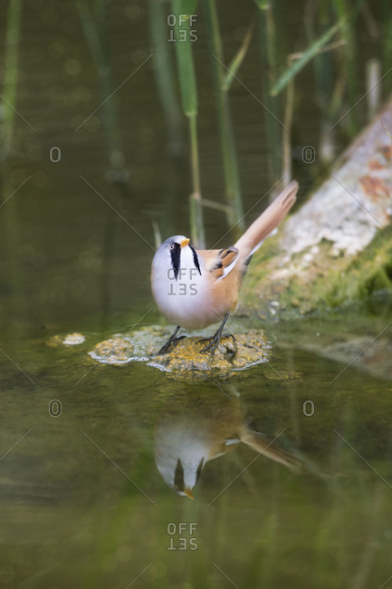 Bird on wood by water
