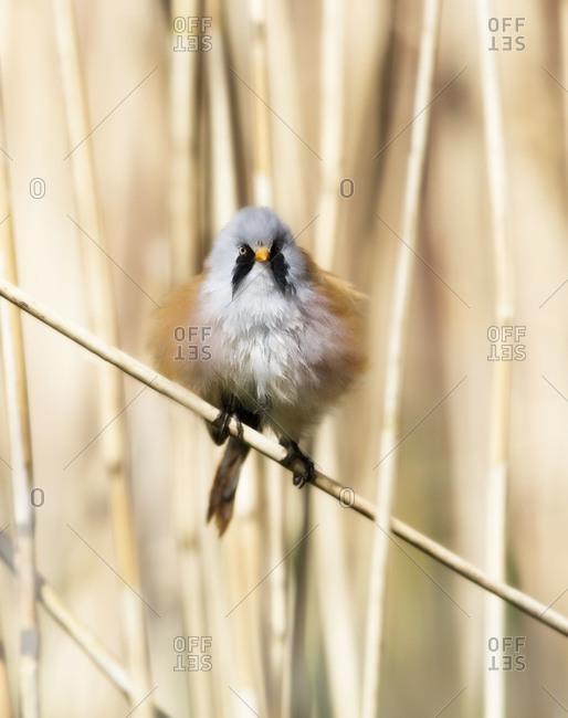Fluffy bird perched on branch