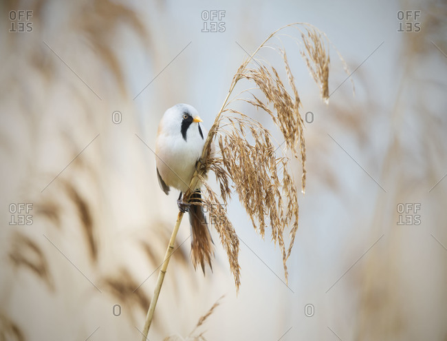 White bird with black markings on plant