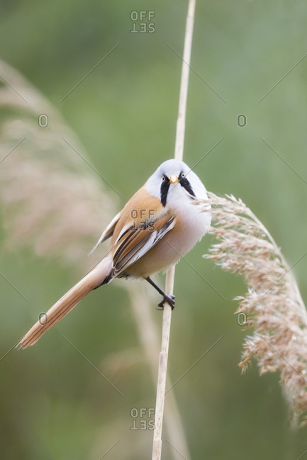 White bird with black markings perched on plant