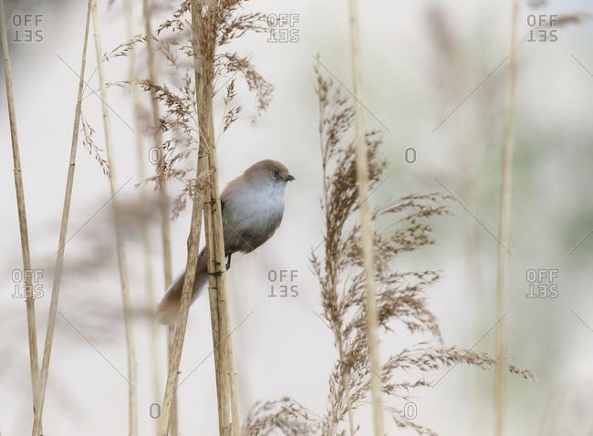 Bird perched sideways on plant