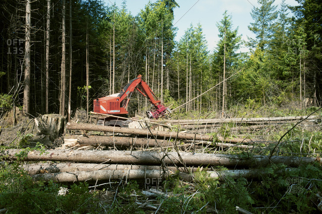 A mechanized grabber sorting trees for timber