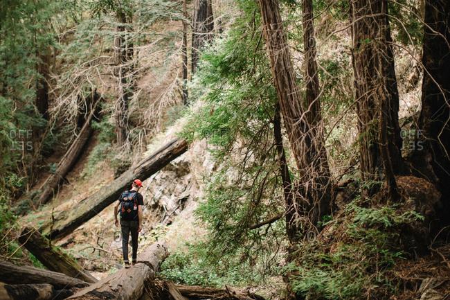 Hiker walks across fallen tree in forest