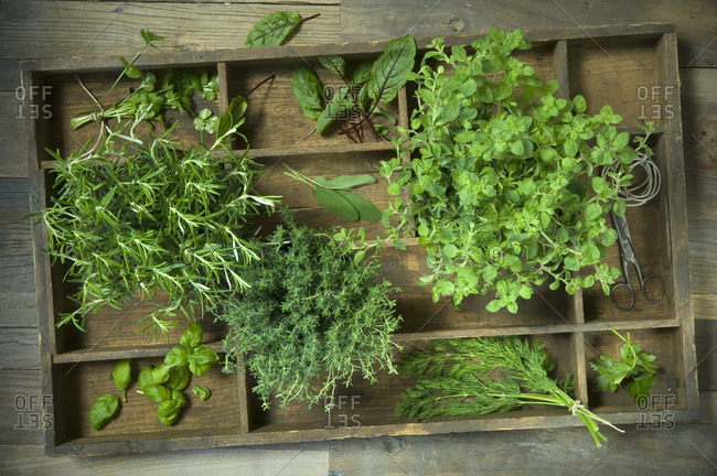 Wooden box of different culinary herbs, string and scissors