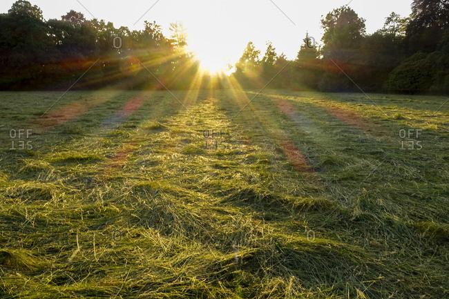 Lednice, landscape garden, new-mown meadow, South Moravian Region