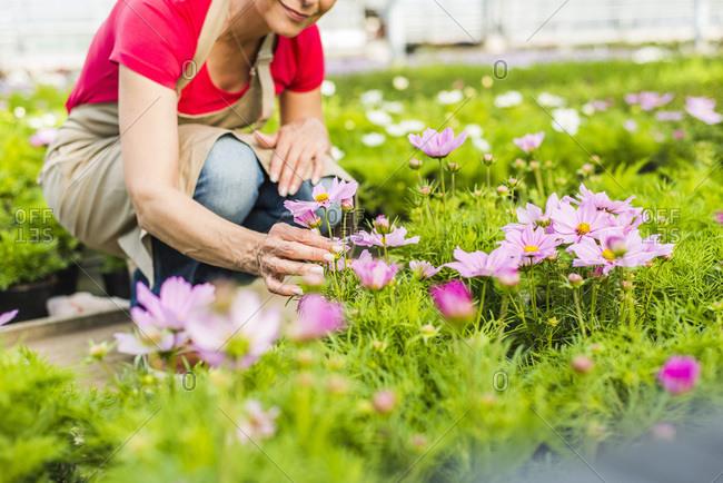 Woman in plant nursery examining flower