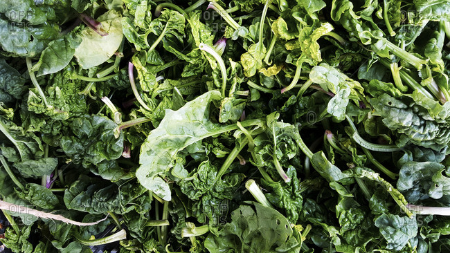 Overhead view of fresh leafy green spinach