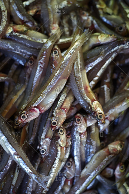 Pile of fresh black anchovies