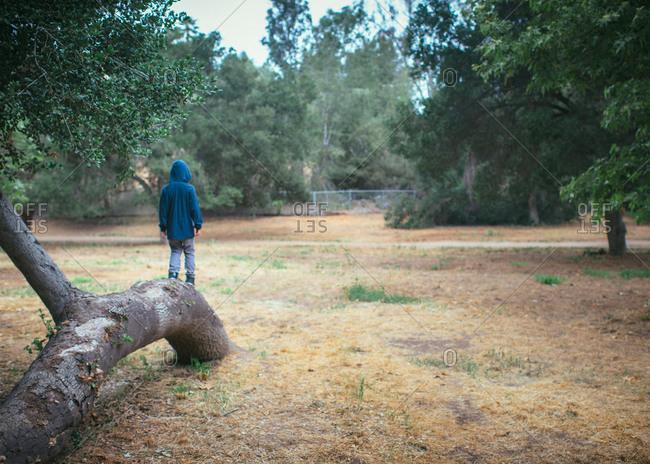 Boy standing on tree trunk in park