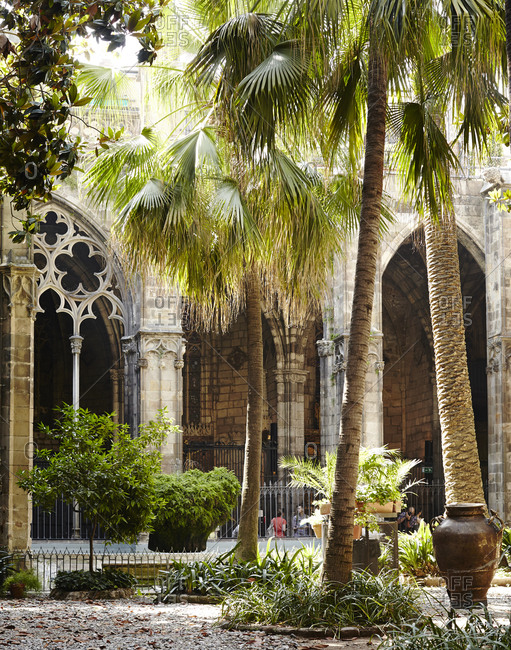 Palm trees in the courtyard of the Barcelona Cathedral, Spain