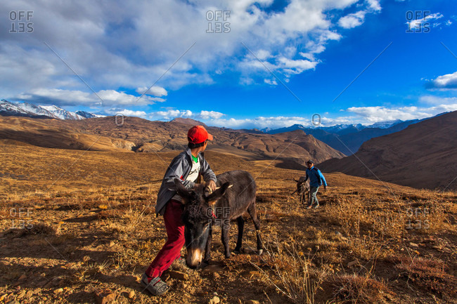 Himachal Pradesh, India - October 18, 2013: Kids pushing donkeys up to the road in Spiti valley, Himachal Pradesh, India