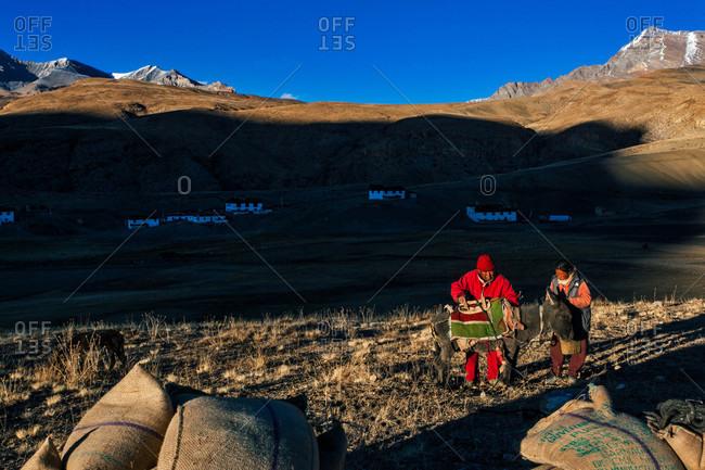 Himachal Pradesh, India - October 19, 2013: People of Langza village with a donkey in Himachal Pradesh, India