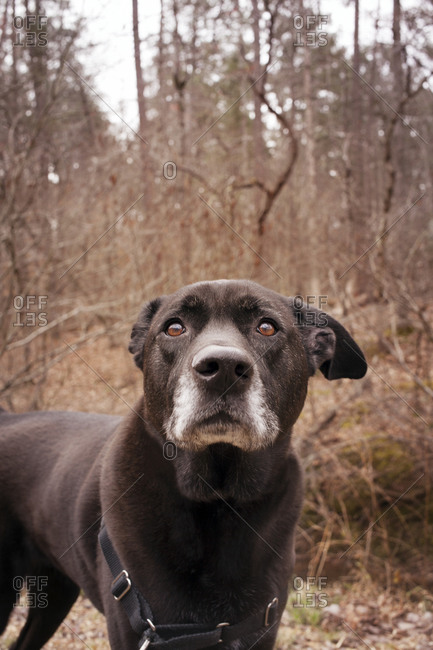 An old dog in the woods