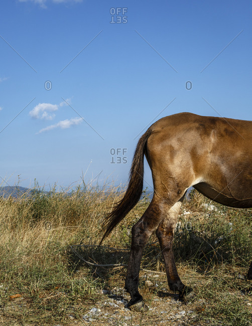 Horse standing in a field in Pelion peninsula, Greece