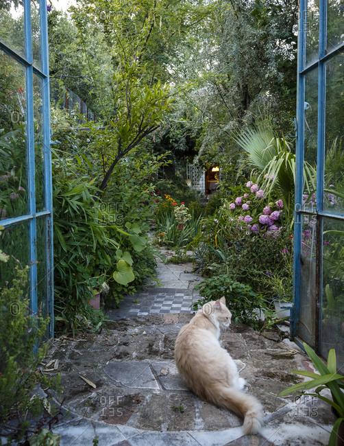 Tsagarada, Greece - July 17, 2014: Cat in Serpentine Organic Garden