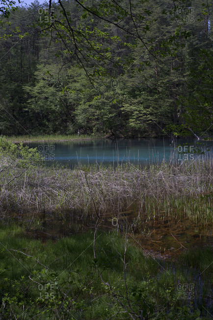 Reeds and grasses growing out of Goshiki-numa lake, Japan