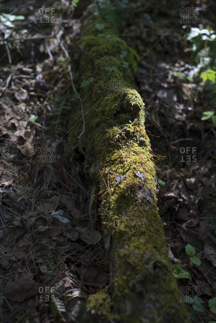 Sun-dappled, mossy log in woods