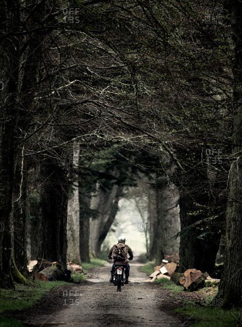 A motorcyclist rides through a forest grove