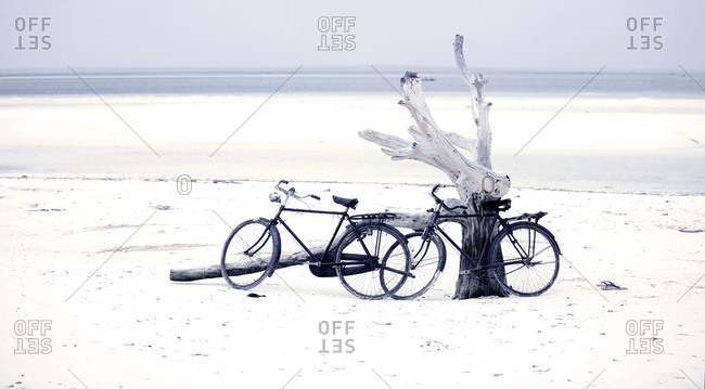 Two bikes leaning against a sun-bleached tree