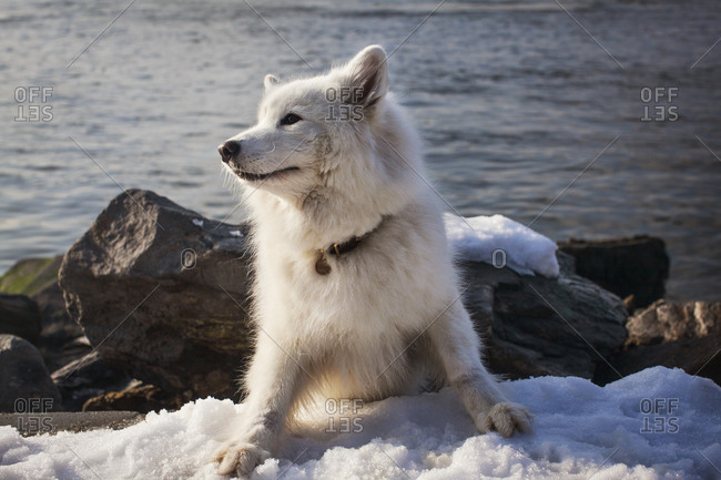 A white dog in the snow by a lake in the Catskills