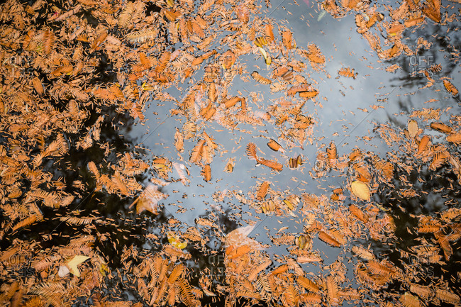 Pine needles and leaves in water